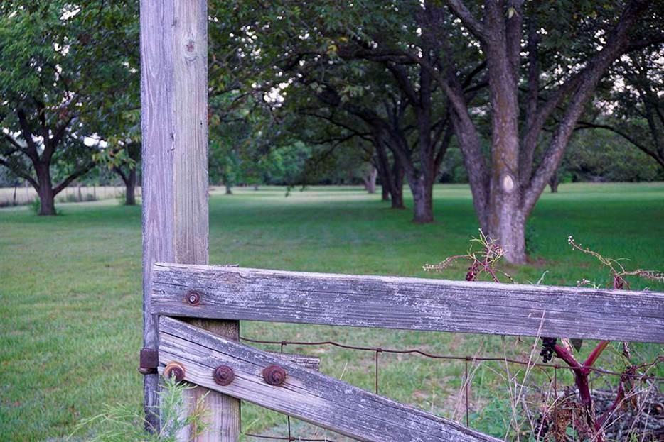 pecan-fence